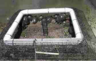 Traps solarium turtle trap turtle tunnel trap turtle amp snake trap